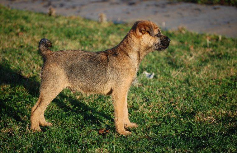 Jakie zwierzęta mają największe szansę na adopcję ze schroniska