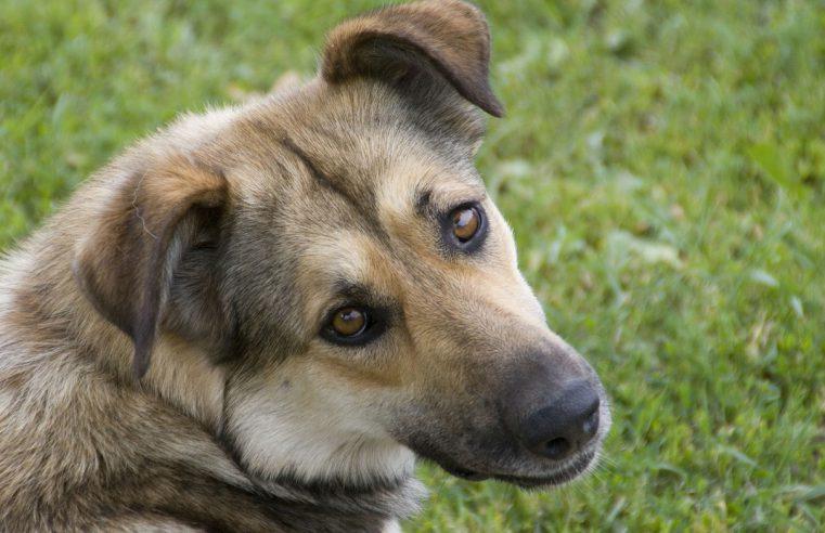 Przyjaciel na całe życie – pies ze schroniska