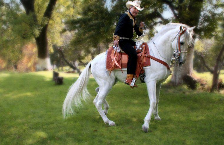Potrzebne są siodła do jazdy konnej